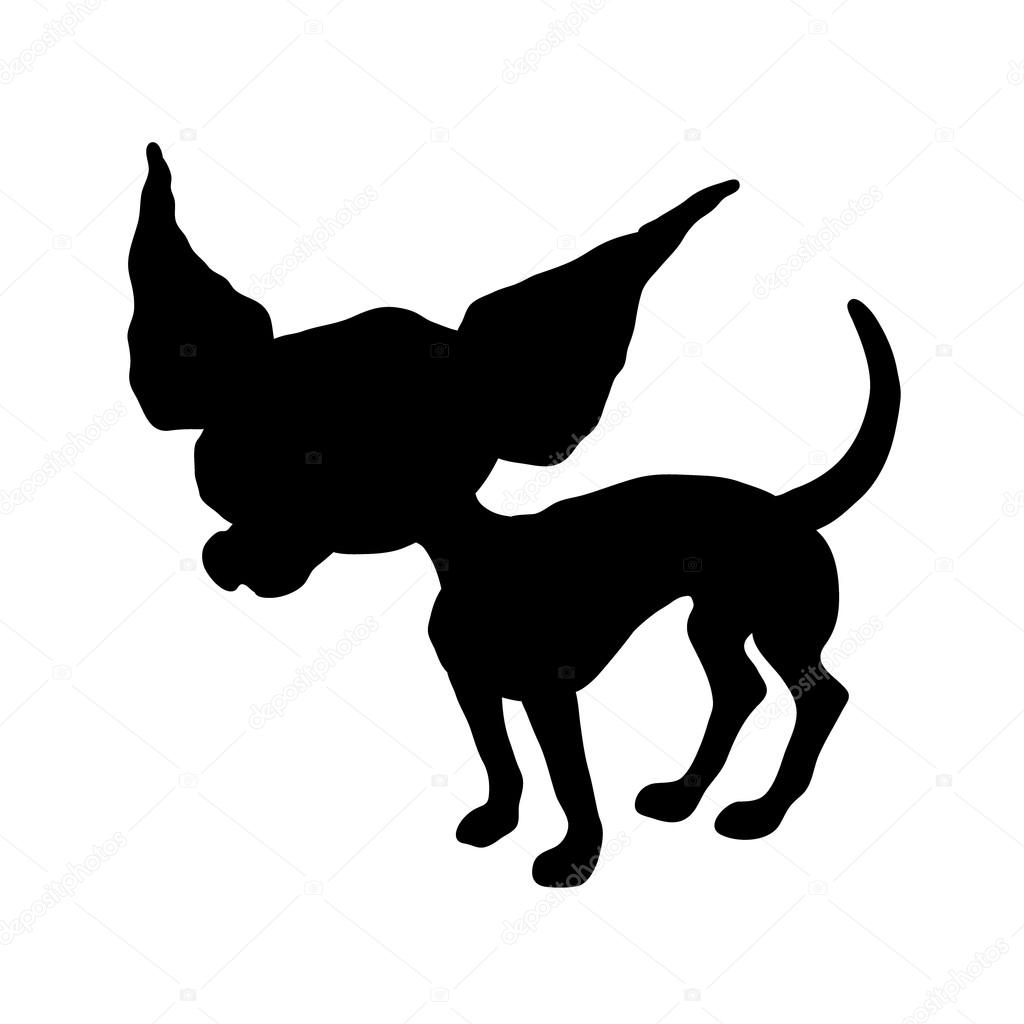 perro chihuahua fondo de - photo #34