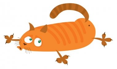 red cat lies on the belly