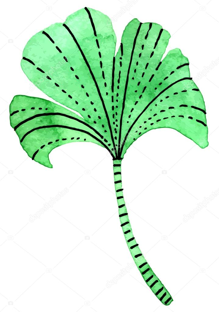 leaf of Ginkgo biloba