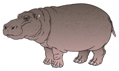 hand drawing illustration of hippo