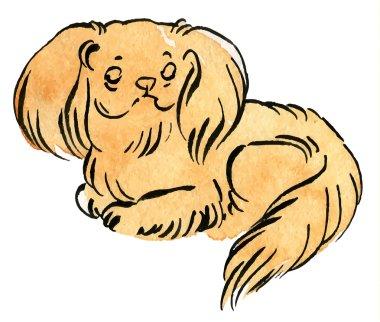 Sable Pekingese dog