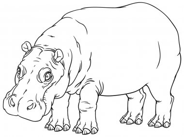 Hand drawing outline illustration of hippo