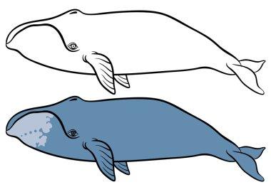 hand drawn   whales