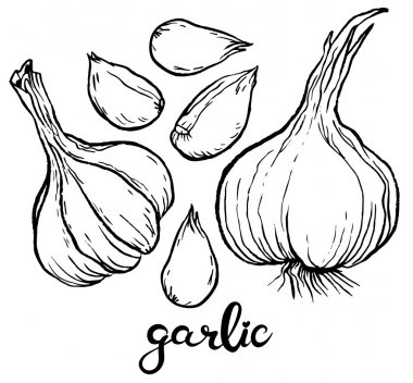 Garlics and cloves of garlic