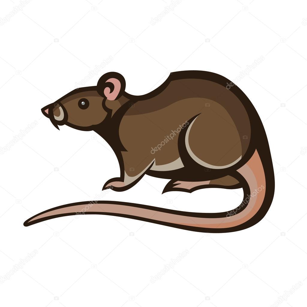 comment tuer un rat dans une maison comment tuer les rats de maison with comment tuer un rat. Black Bedroom Furniture Sets. Home Design Ideas
