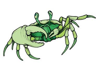 Hand drawn line art colorful crab