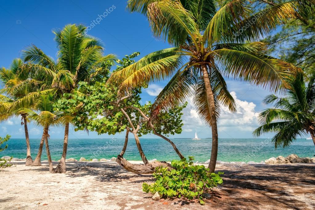 Palm beach. Palm trees on a beach, island in the Caribbean Sea.