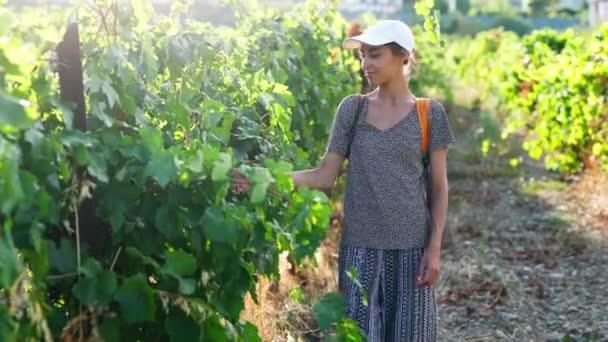fiatal spanyol nő farmer sétál egy sor szőlőültetvények