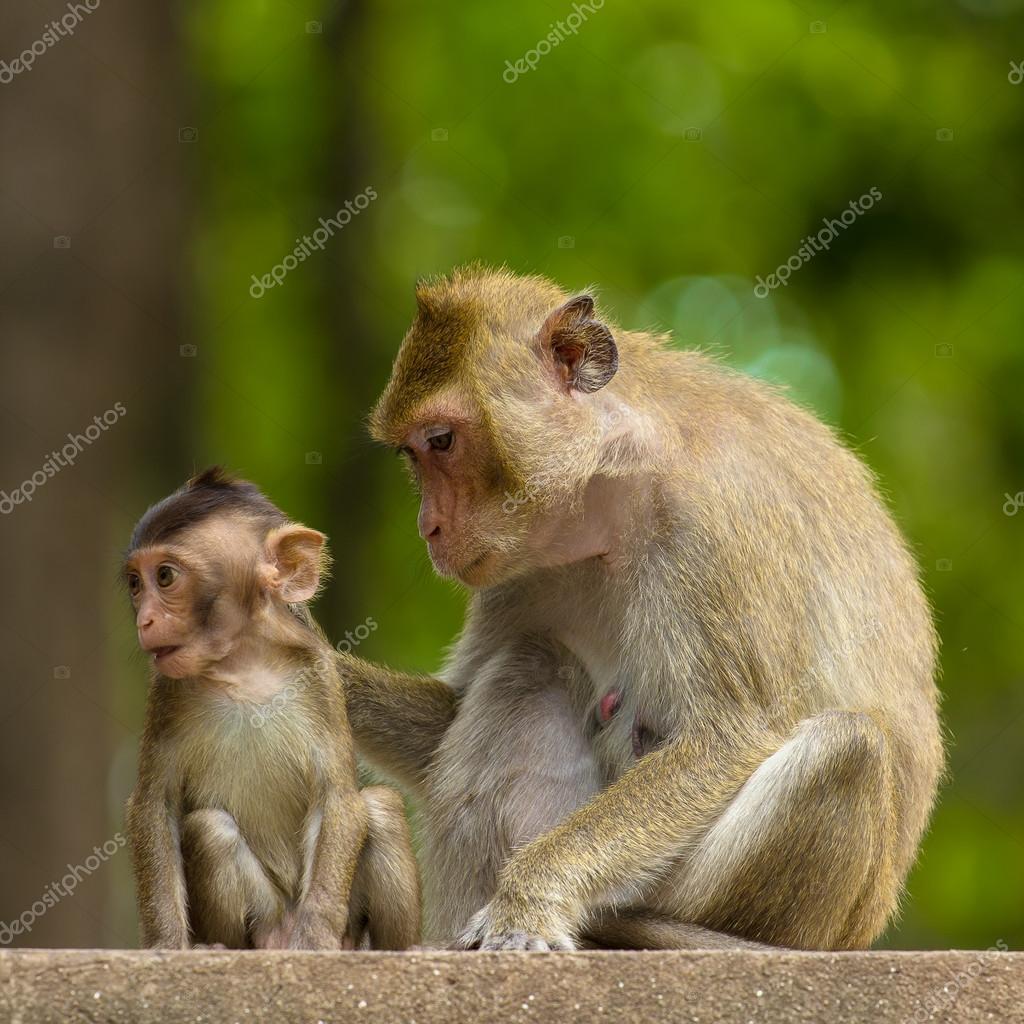 Gewaltig Haustier Affe Galerie Von Mama Und Baby — Stockfoto