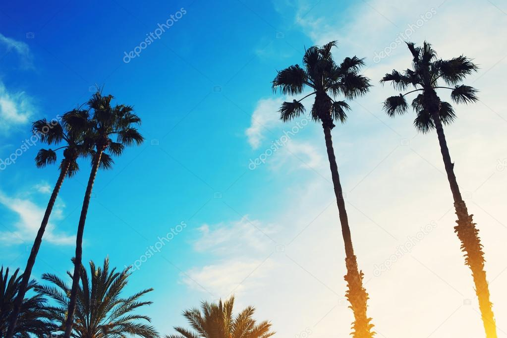 palm trees against bright sky at sunset
