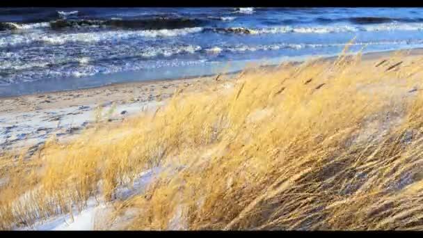 Dünenszene mit Strandgras und Schnee an einem Ostseestrand Riga