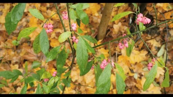 Růžová podzimní květiny se zelenými listy na větvi