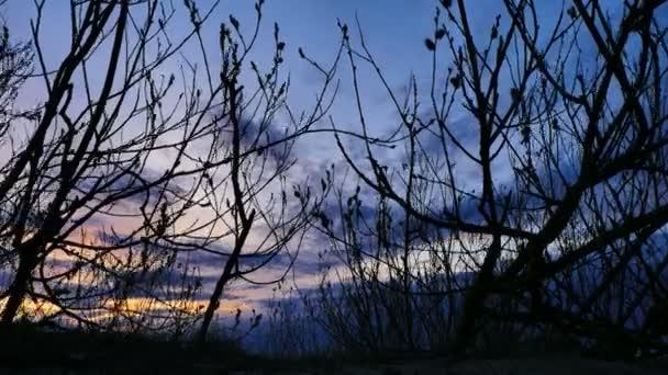 Krásný západ slunce s strom večer