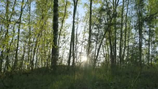 Video B73510723