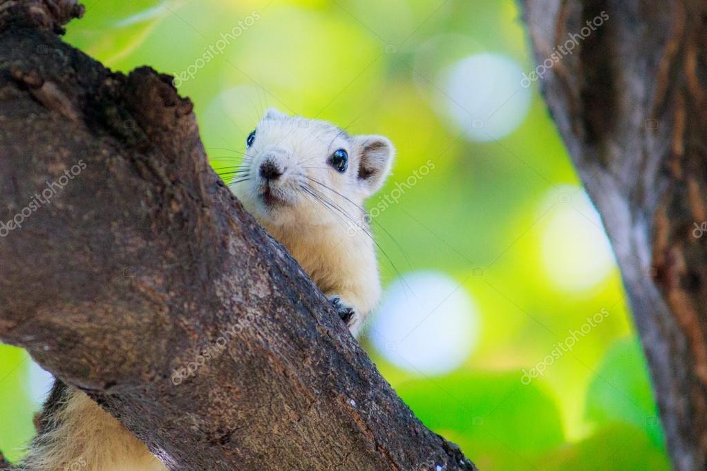 Squirrels in nature