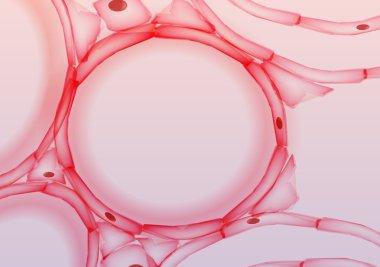 Alveoli in Lungs Tissue Slice, Cross section - Vector Illustration
