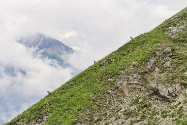 Three mountain gotas at alpine slope