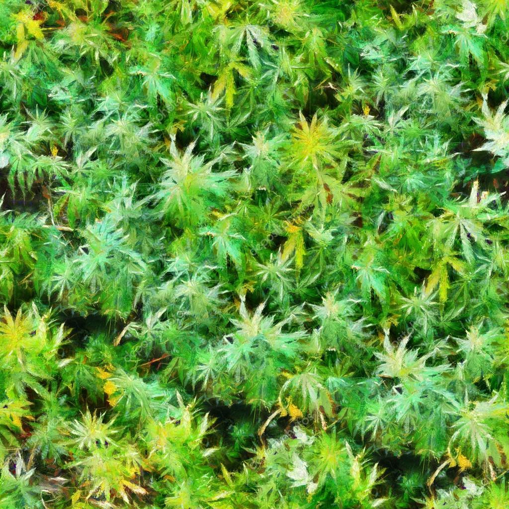Marijuana plants field seamless texture pattern oil painting
