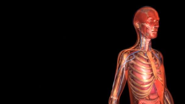lidský organismus anatomie