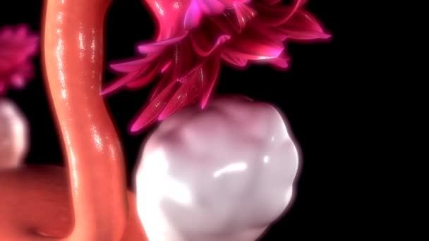 Anatomía del ovario femenino — Vídeos de Stock © sciencepics #108807518