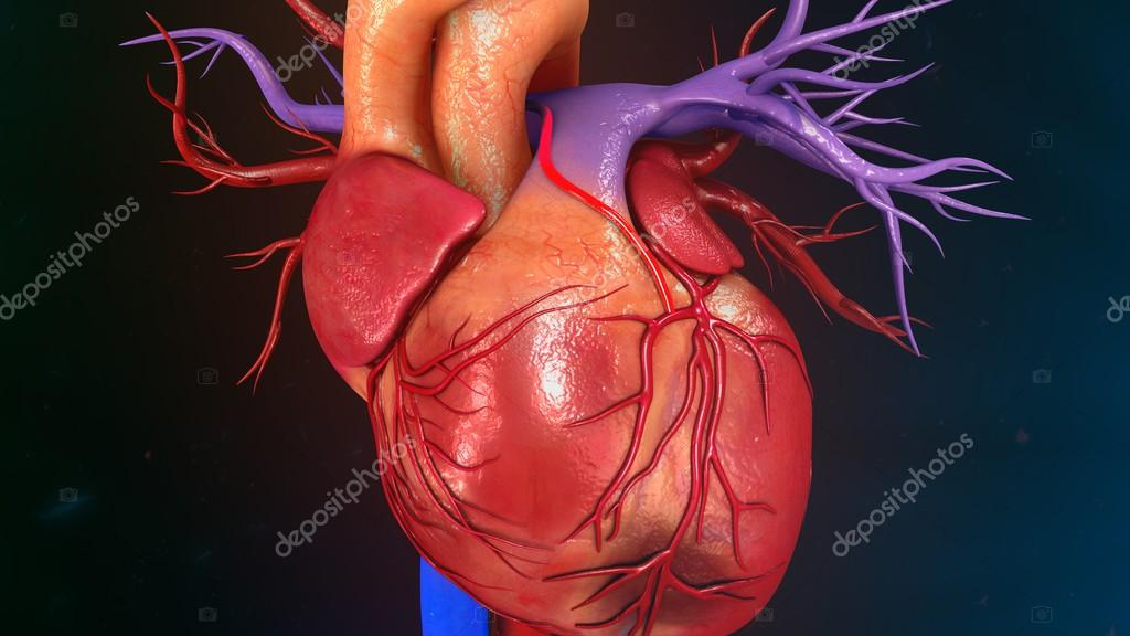 Heart Myocardial Infarction — Stock Photo © sciencepics #112248786