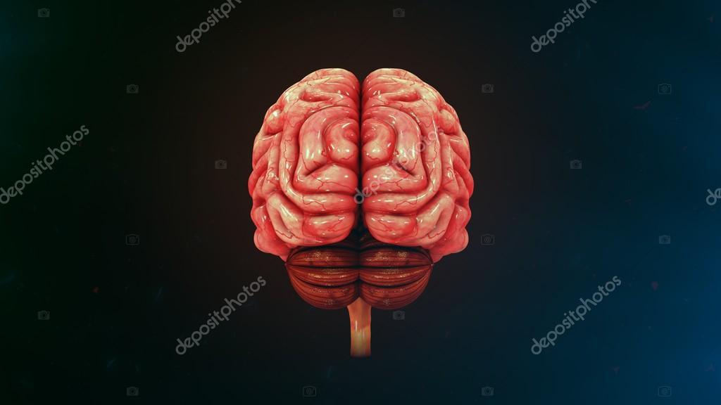 Anatomía del cerebro humano — Foto de stock © sciencepics #114328144