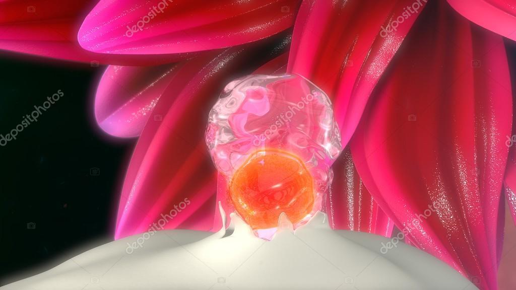Anatomie der menschlichen Eisprung — Stockfoto © sciencepics #114328760