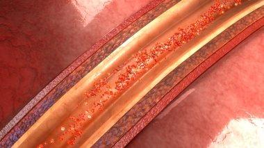 human artery anatomy