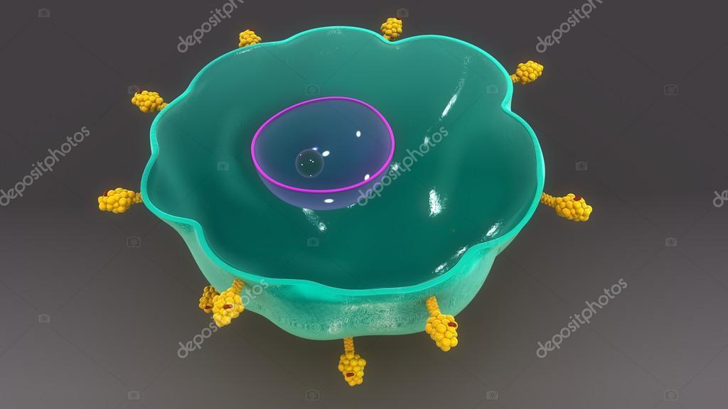 menschliche Makrophagen Zelle Anatomie — Stockfoto © sciencepics ...