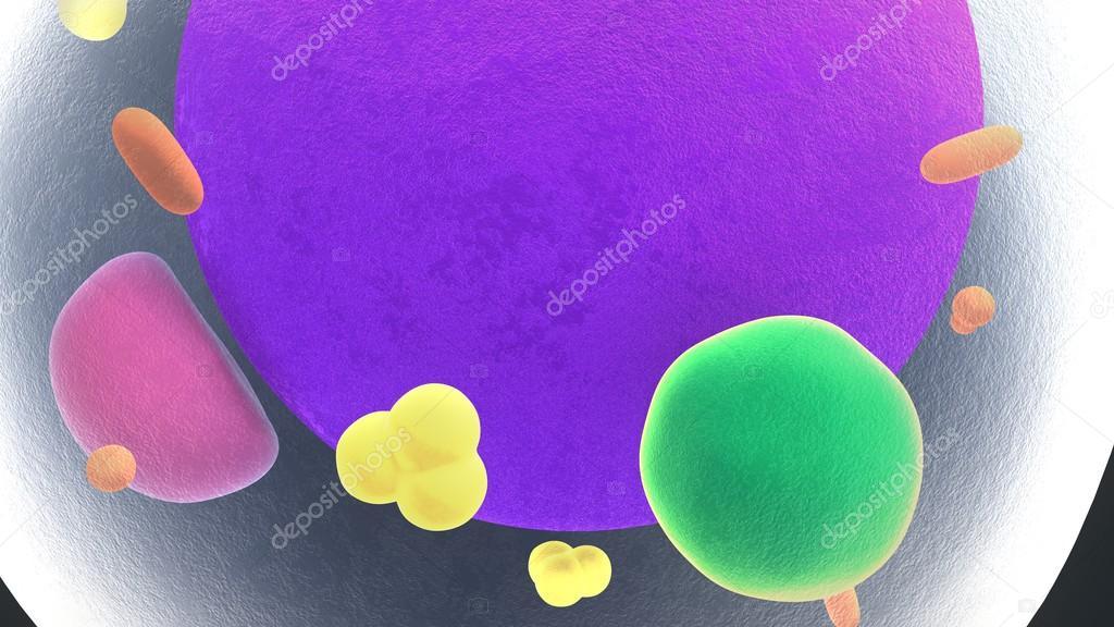 Anatomía de las células de grasa — Foto de stock © sciencepics ...