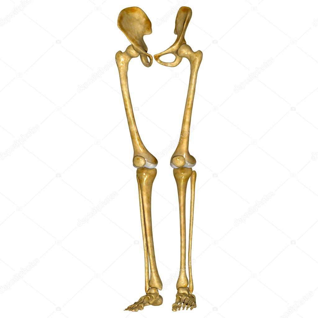 Piernas de esqueleto — Foto de stock © sciencepics #57980023