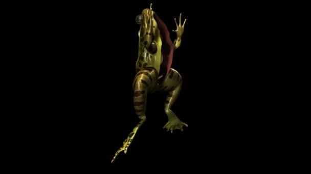 žába anatomie
