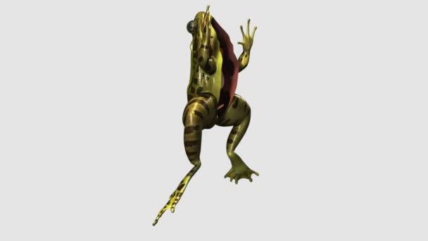 Frosch-Anatomie