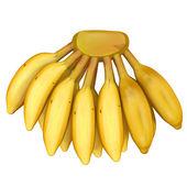 Fotografie Banana