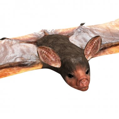 Bats are mammals of the order Chiroptera whose forelimbs form webbed wings, making them the only mammals naturally capable of true and sustained flight. stock vector