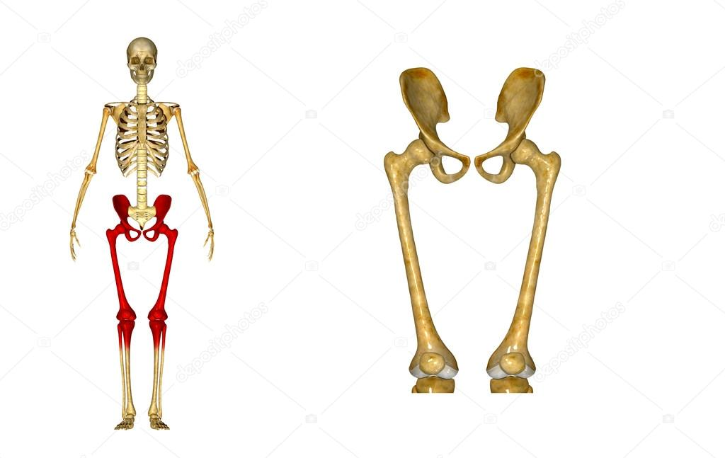 Cadera con el fémur — Foto de stock © sciencepics #63060847