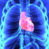 Fotografie menschliche Herz