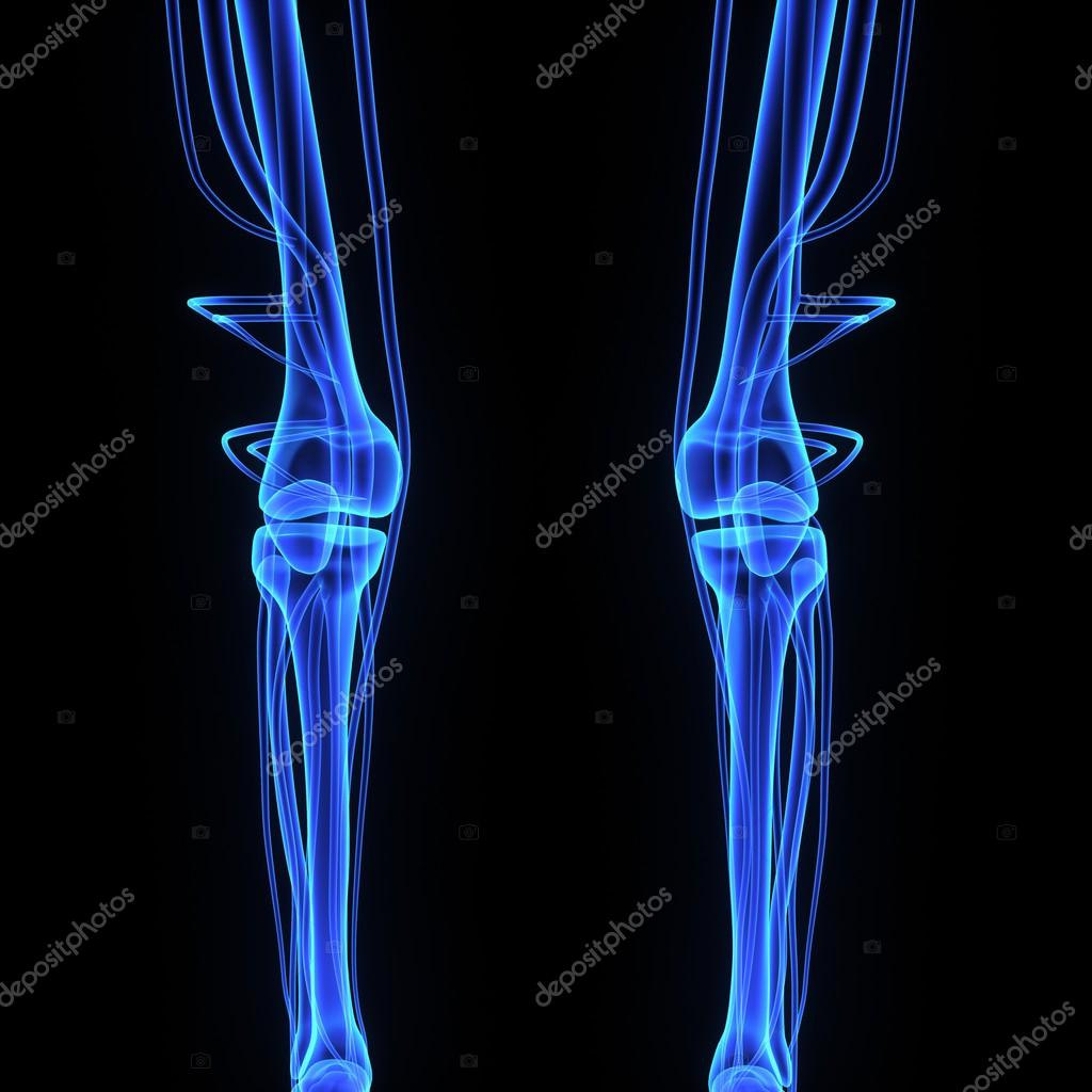 Knee Joint Stock Photo Sciencepics 67957703