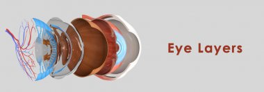 Eye layers anatomy