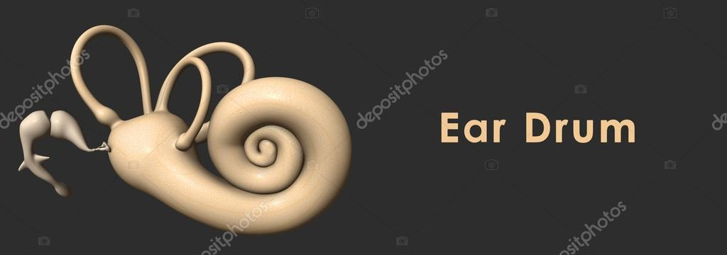Ear drum anatomy — Stock Photo © sciencepics #73309665