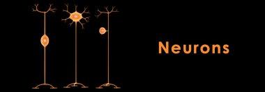 Human Neurons anatomy