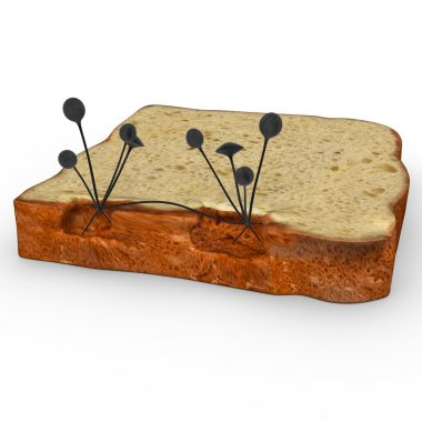mucor mould on bread