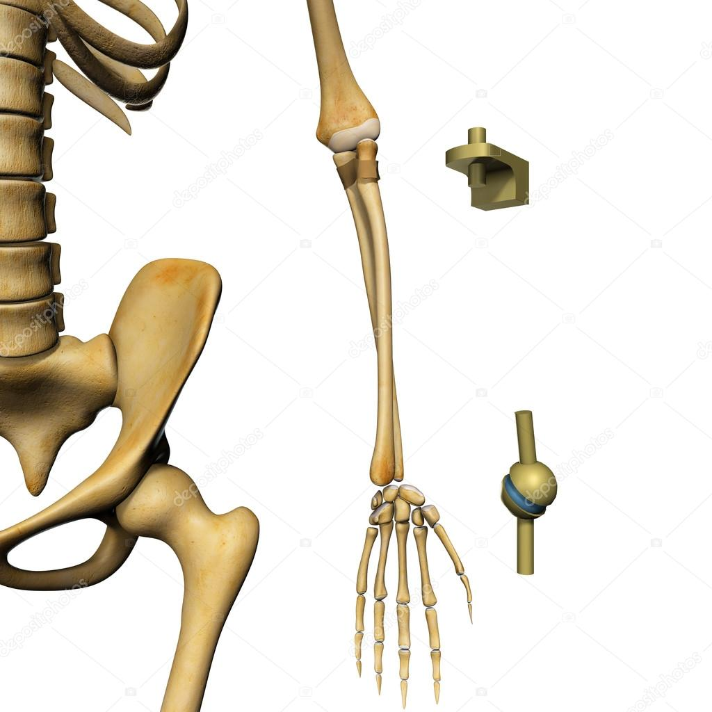 Synovial joint anatomy — Stock Photo © sciencepics #75126769