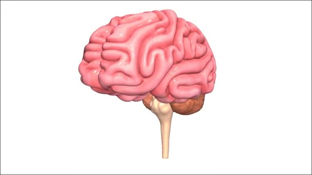 Brain medicine science animation