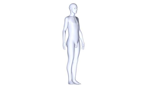Tělo Lékařská věda animace