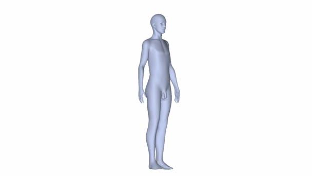Lidské tělo Lékařská věda animace