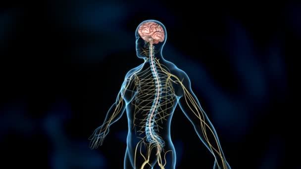 Nervous medicine science animation