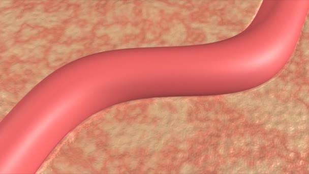Sauerstoff im Blut Medizin Wissenschaft animation