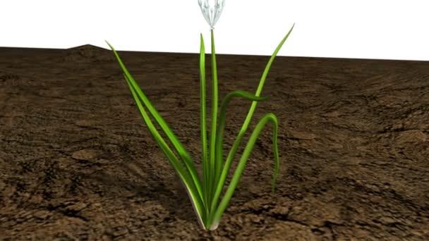 Cibule rostlin věda animace
