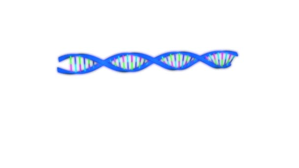 RNA polymerase animation
